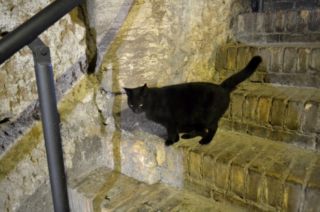 Black cat at the Colosseum