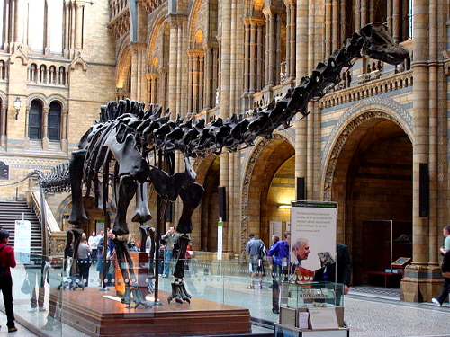 Dippy, a diplodocus skeleton cast at the Natural History Museum
